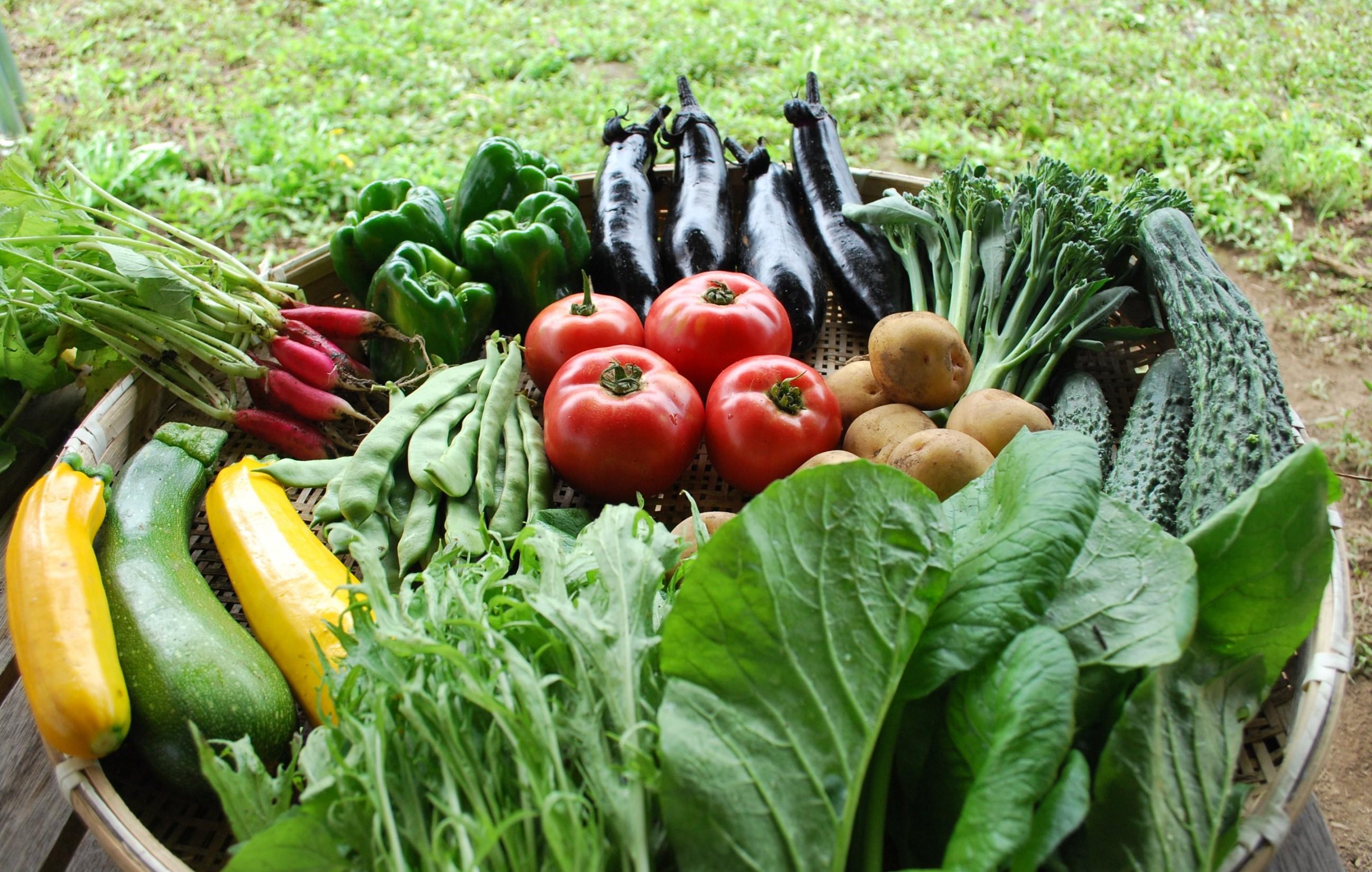 旬の有機野菜セット定期便について
